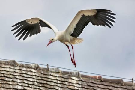Storch im Abflug, Allensbach
